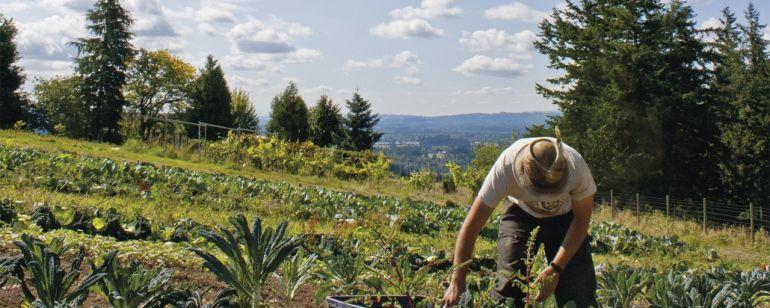 A farmer tending crops on a Skyline Farm in Northwest Portland