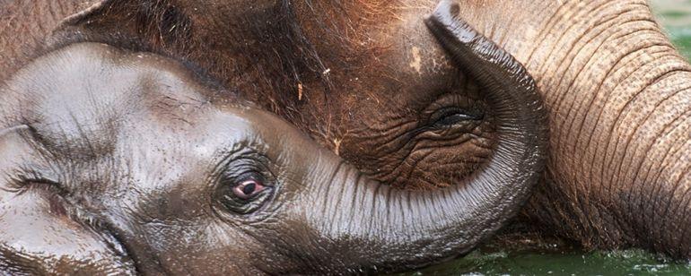 子ゾウのリリーと母ゾウのローズツー
