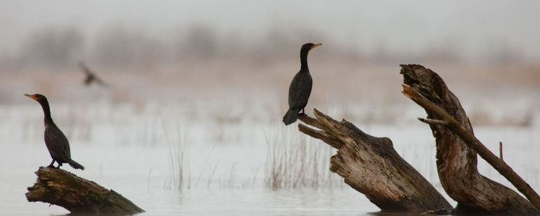 Waterfowl at Oaks Bottom Wildlife Refuge