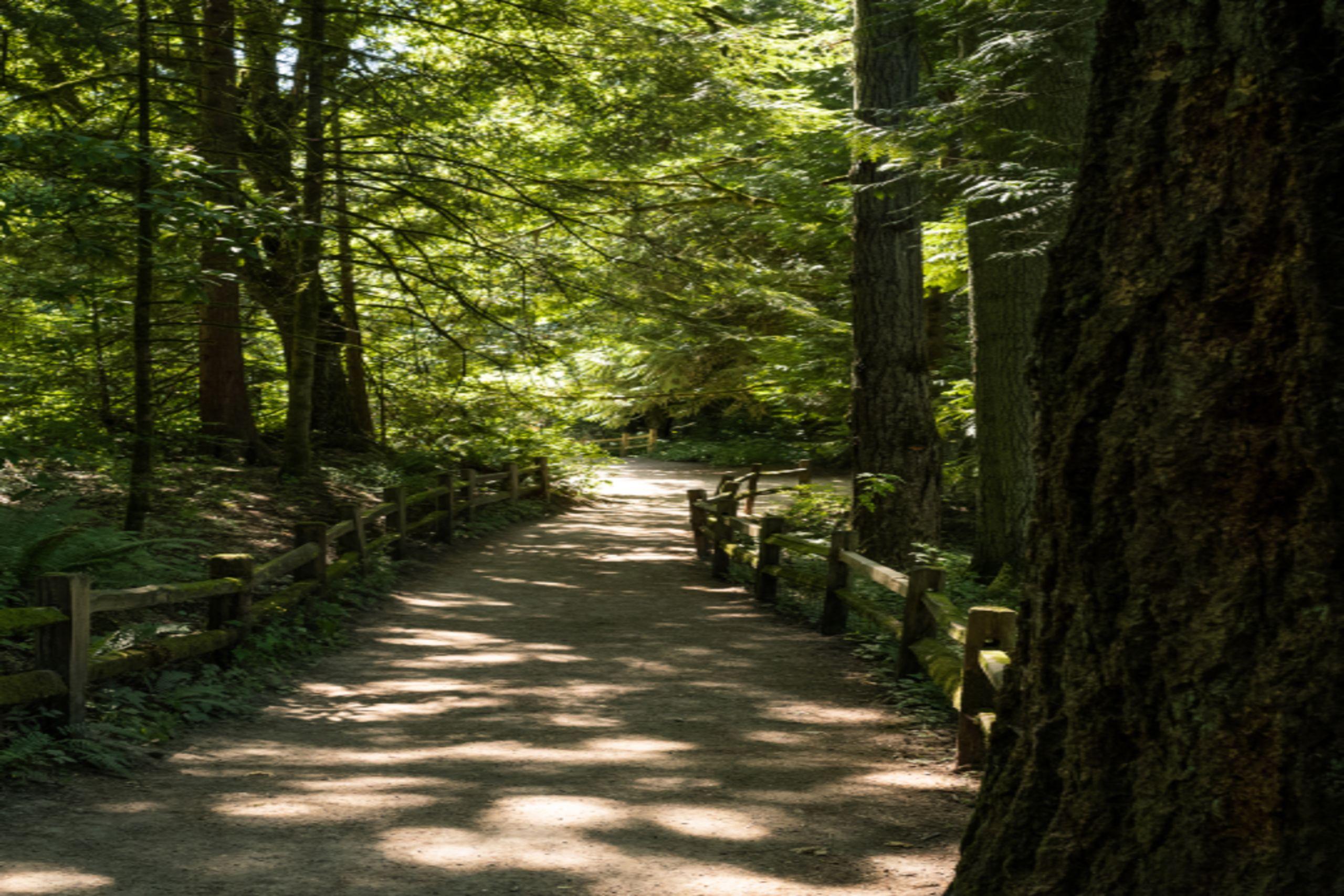 sun dappled trail in forest setting