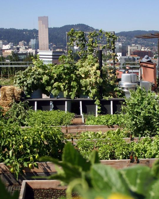 a rooftop garden with the downtown Portland skyline in the background