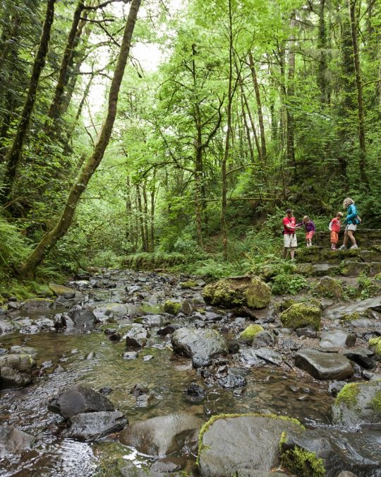 A family with two small children a hike along a tree-shaded stream.