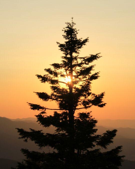Sunrise behind a tree at Soda Mountain
