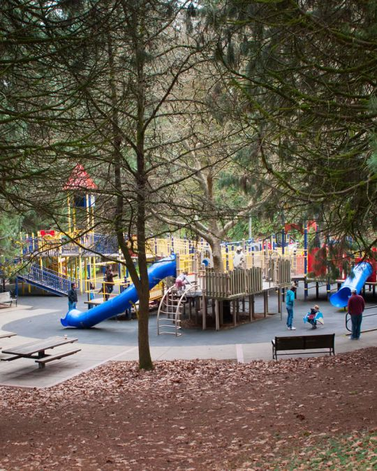 a large play structure in under even larger evergreen trees