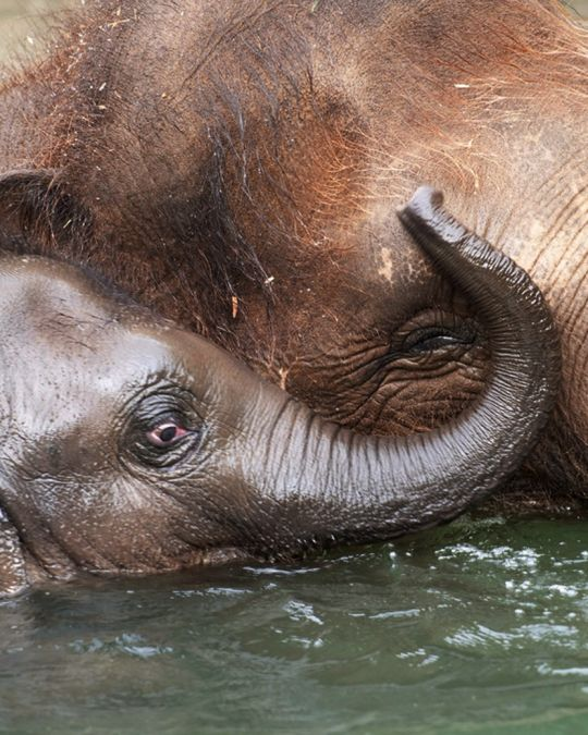 adult and baby elephant playing together in water