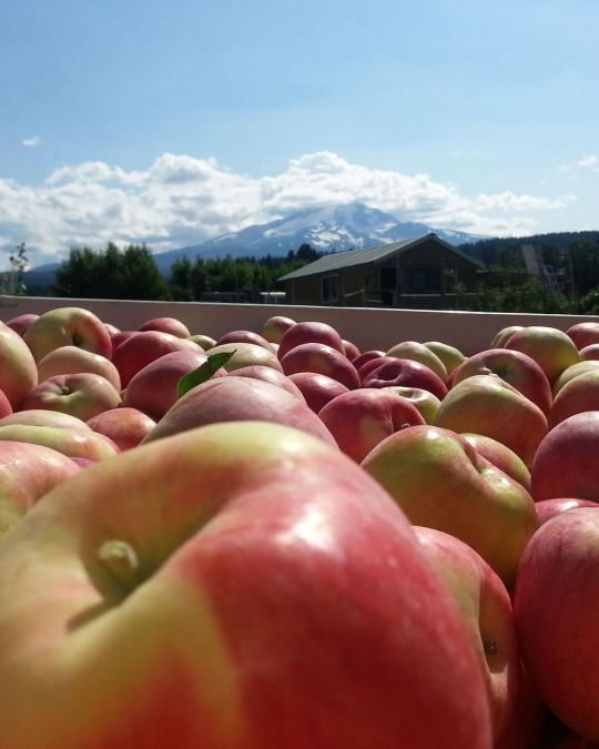 a large vat of apples on a sunny day