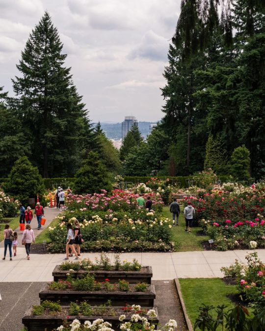 people on sidewalk of rose garden with city views in background