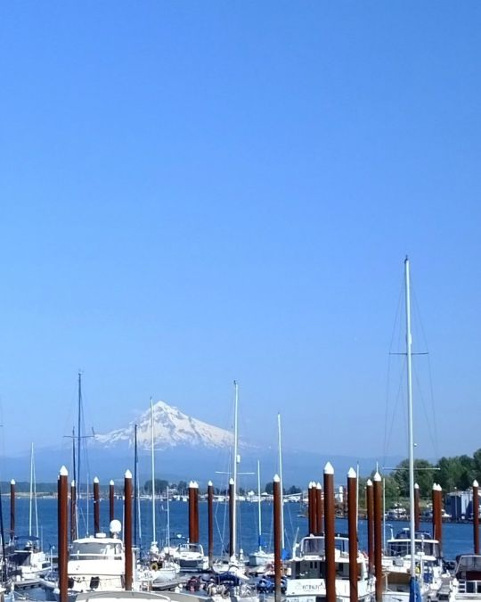 A crow sits on a pole above a marina full of boats, with a snowcapped mountain in the distance