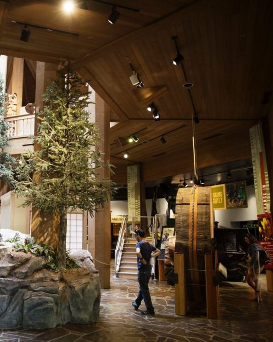 a tree museum