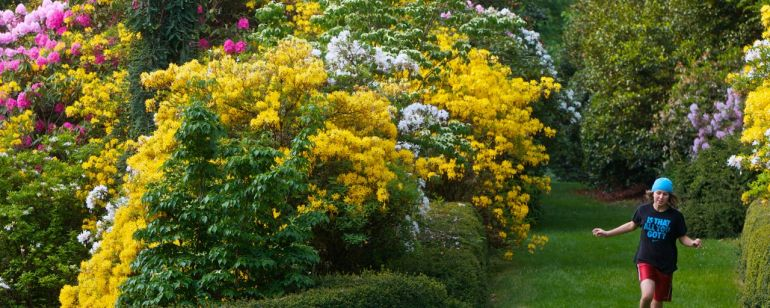 large pink and yellow rhododendron are the backdrop for a young woman playing in Portland's Washington Park.