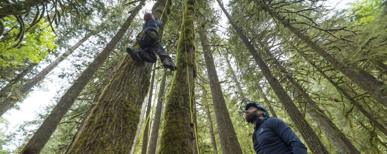 A climber descends from a tree while another person watches.