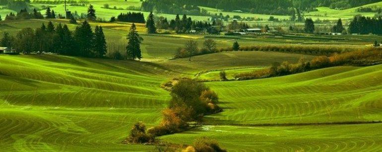 views of bright green fields and farmland makes up the Vineyard and Valley Scenic Route
