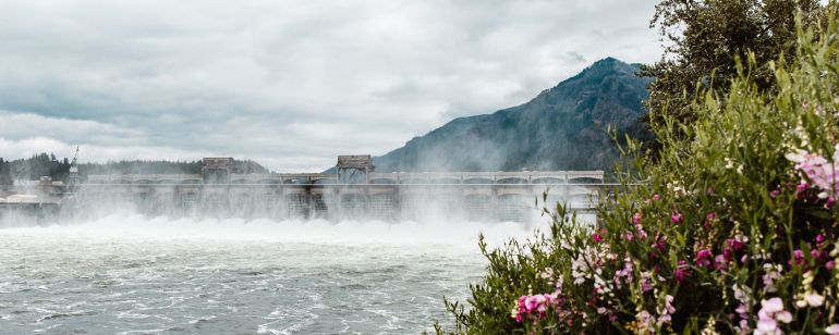 mist rises from a large river dam in the distance, behind wildflowers blooming on the shoreline