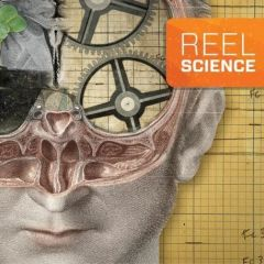 Reel Science: The Divided Brain