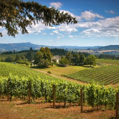 Wildwood Tours Willamette Valley Wine Tasting Tour