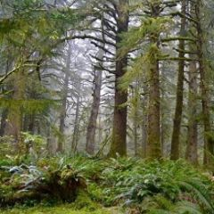 Science Pub Portland: Ecology and Old-Growth Forests