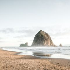 Wildwood Adventures Full Day Oregon Coast Tour