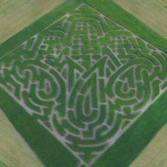 Corn Maze at Topaz Farm