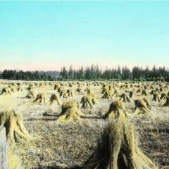 Flaxen: From Flax to Linen in the Willamette Valley, Oregon