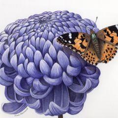 Mums & More Botanical Art Exhibition