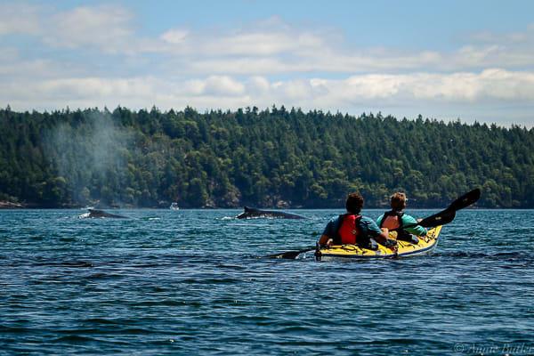 Full Day Kayak Tours