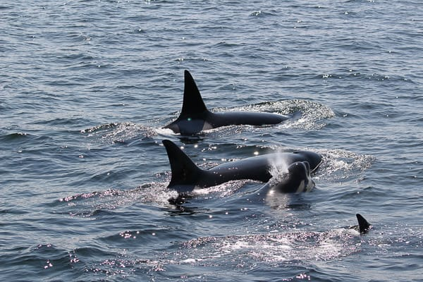 Whale Watching & Sea Kayak Combo Deal