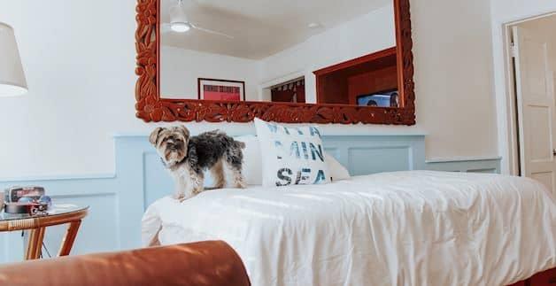 Pet Friendly Hotel at Santa Monica