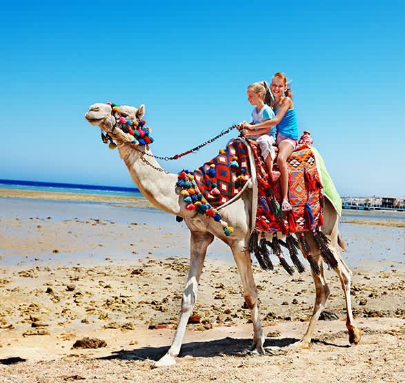 Safari en Camello en Los Cabos