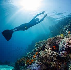 Snorkeling en Los Arcos de Cabo San Lucas