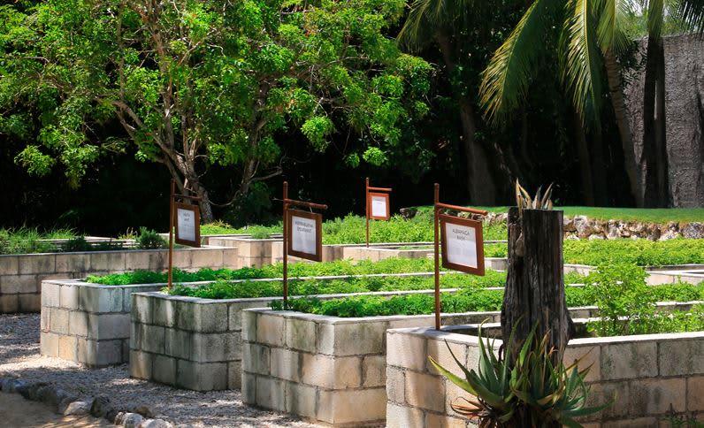 Grand Velas Riviera Maya - Jardín Botánico