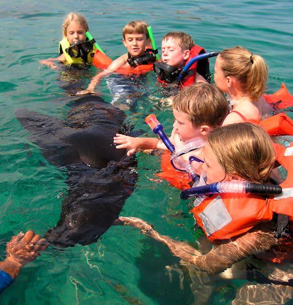 Velas ResortsPaquete de Snorkel en Riviera Maya