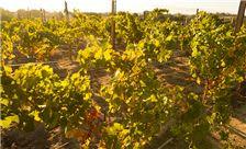 Allegretto Vineyard Resort Paso Robles - Vineyard