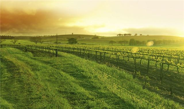 Things to do in Paso Robles, California, in January