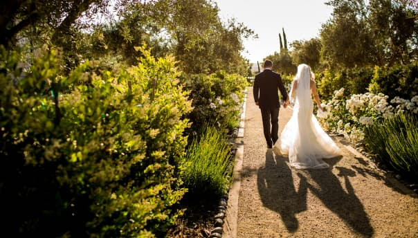 Olive Orchard at Paso Robles, California Hotel
