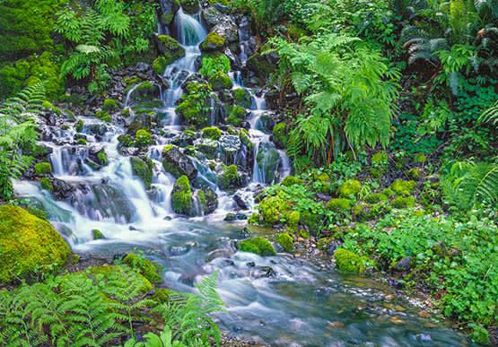 Siskiyou National Forest in Oregon
