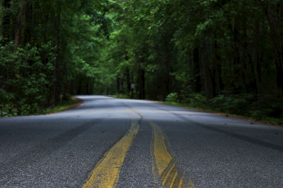asheville_forest_road