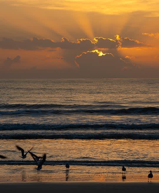 our-resort-daytona-beach-florida-hotel-faq