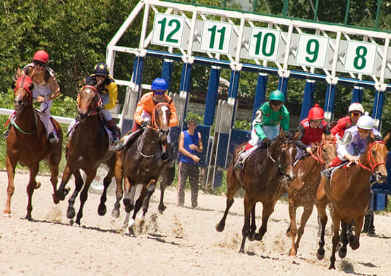 Nearby Sporting Event Attractions in St. Pete Beach, Florida
