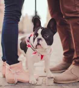 Pets Specials at Freepoint Hotel Cambridge, Tapestry Collection