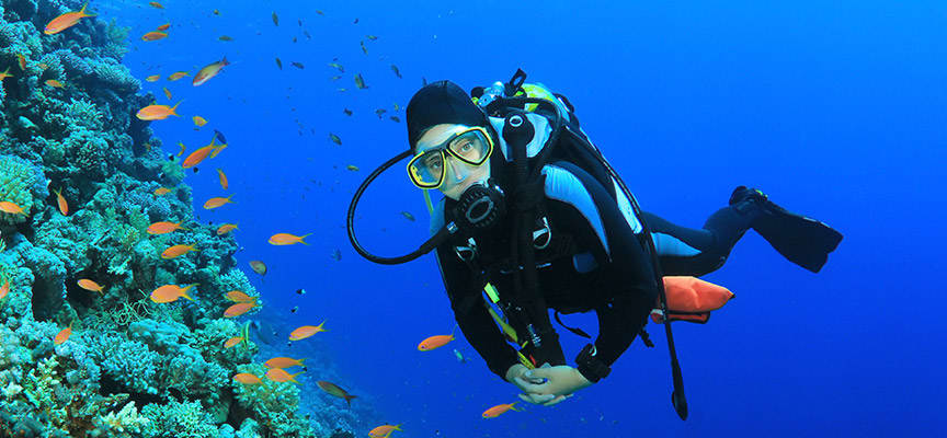 Pelican Rock Snorkeling and Scuba Diving at Baja California Sur