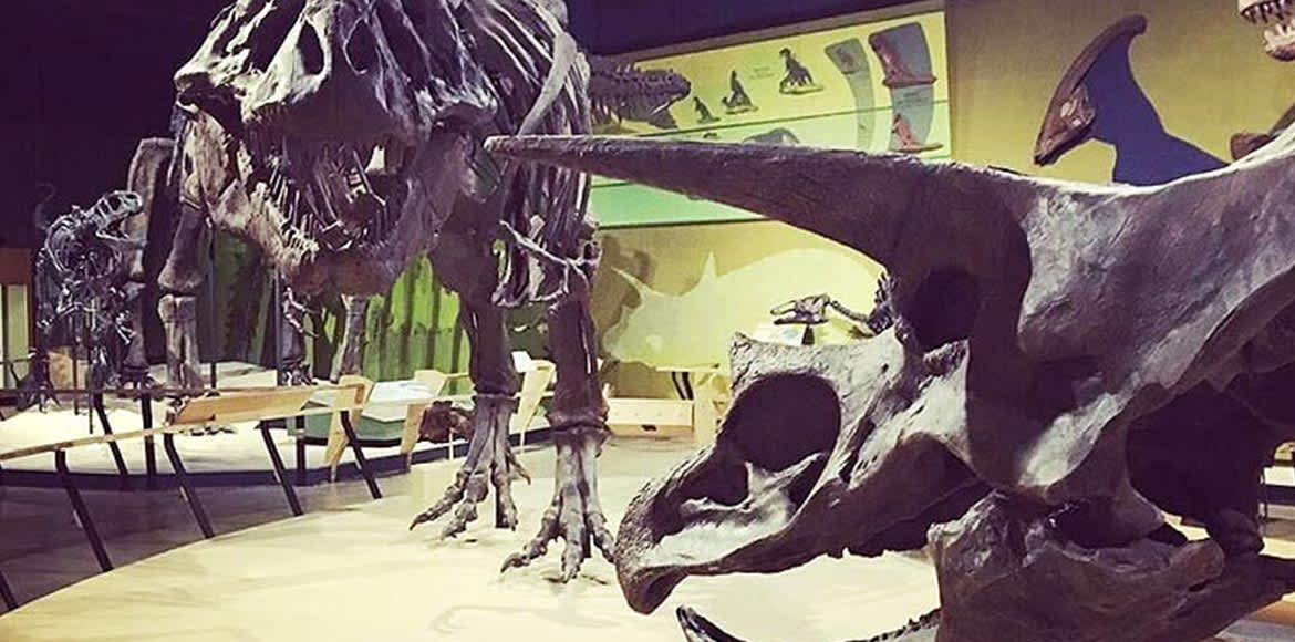 Museum of Natural History in Ohio