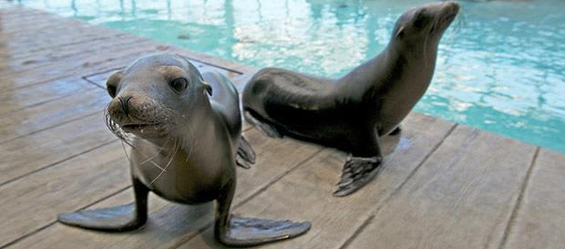 New England Aquarium Package at Boston Hotel