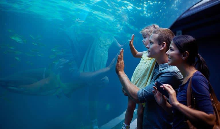 Monterey Bay Aquarium Package at Hotel Pacific Street Monterey California
