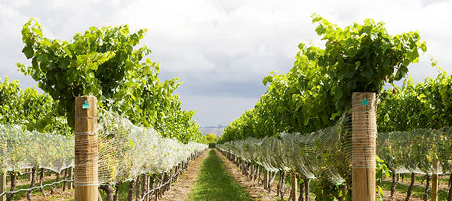 Perrisos Vineyards And Winery of Horseshoe Bay