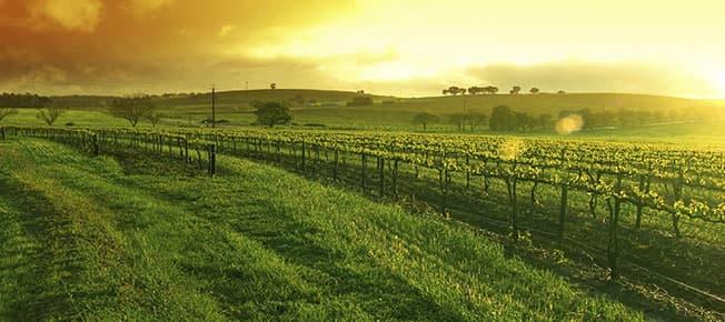 Spicewood Vineyards of Horseshoe Bay