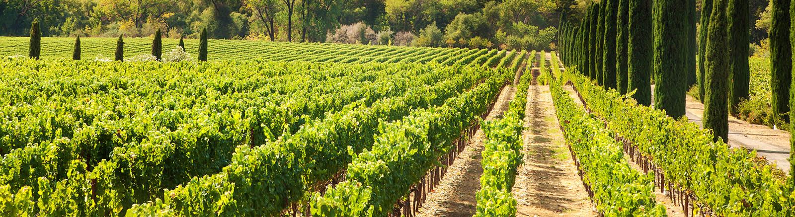 Texas Wine Country of Horseshoe Bay