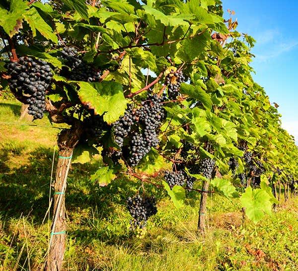 Fall Creek Vineyards of Texas