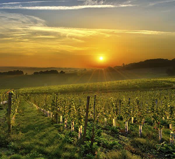 Spicewood Vineyards of Texas
