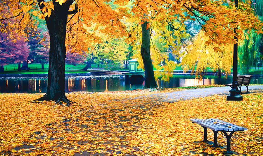 Boston Fall Foliage: Leaf-Peeping Tours & Autumn Adventures