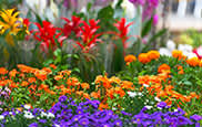 Boston Events - 2017 Flower and Garden Show: